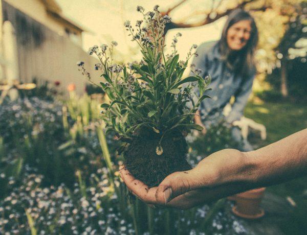 6 Maneiras Eficazes Para Ter Uma Casa Sustentável