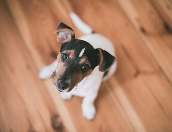 Qual o Melhor Piso Para Casa Com Cachorro?