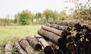 Você Sabe o Que é Madeira de Manejo e a Importância para o Meio Ambiente?